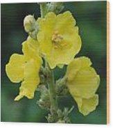 Yellow Flowers - 2 Wood Print