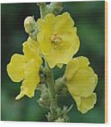 Yellow Flowers  1 Wood Print