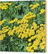 Yellow Flowers 3 Wood Print