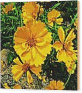 Yellow Flowers Cape Cod Wood Print