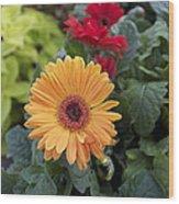 Yellow Flowers Wood Print by Jocelyne Choquette