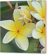 Yellow Frangipani Flowers Wood Print