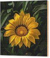 Yellow Gazania Wood Print