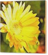 Yellow Gebera Wood Print