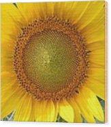 Yellow Glory #1 Wood Print
