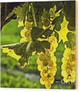 Yellow Grapes In Sunshine Wood Print