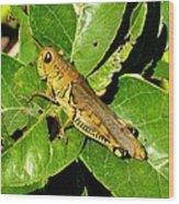 Yellow-green Grasshopper Wood Print