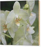 Yellow-green Phalaenopsis 8837 Wood Print