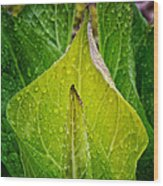 Yellow Green Skunk Cabbage Square Wood Print