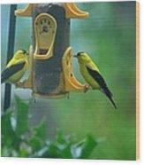 Yellow Grosbeak Duo Wood Print