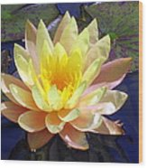 Yellow Hardy Water Lily Wood Print