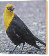 4m09157-02-yellow Headed Blackbird Wood Print