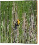 Yellow Headed Blackbird Wood Print