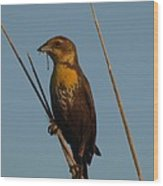 Yellow-headed Blackbird With Dragonfly Wood Print