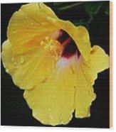 Yellow Hibiscus In The Rain Wood Print