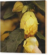 Yellow Hibiscus Late Afternoon Wood Print