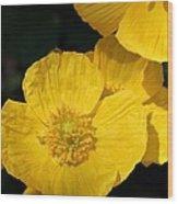 Yellow Iceland Poppy Wood Print