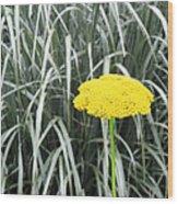 Yellow Immortelle Flower Wood Print