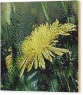 Yellow In The Rain Wood Print
