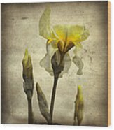 Yellow Iris - Vintage Colors Wood Print