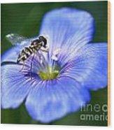 Blue Flax Flower Wood Print