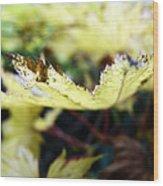 Yellow Japanese Maple Wood Print