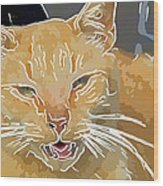 Yellow Kitty Wood Print