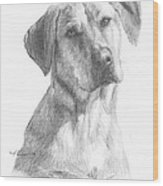 Yellow Lab Dog Pencil Portrait Wood Print