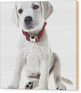 Yellow Lab Puppy Wood Print
