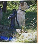 Yellow Labrador Wood Print