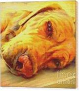 Yellow Labrador Portrait Wood Print