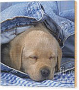 Yellow Labrador Puppy Asleep In Jeans Wood Print