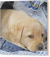 Yellow Labrador Puppy In Jeans Wood Print