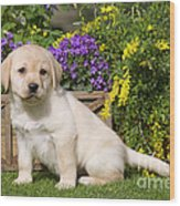 Yellow Labrador Puppy Wood Print
