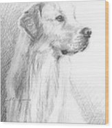 Yellow Labrador Show Dog Pencil Portrait Wood Print