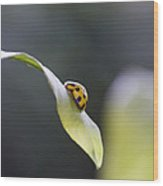 Yellow Ladybug At Dawn Wood Print