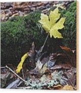 Yellow Leaf Wood Print