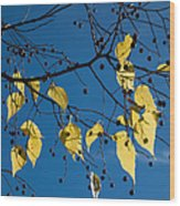 Yellow Leaves And Blue Sky In Autumn Wood Print