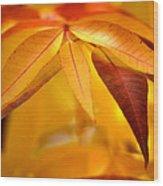 Yellow Leaves At Dawn Wood Print