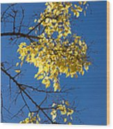 Yellow Leaves In Fall And Deep Blue Sky Wood Print