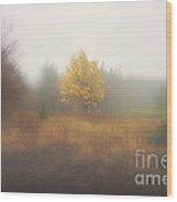 Yellow Leaves Of Tree In Fog At Dolly Sods Wood Print