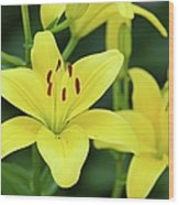 Yellow Lilly 8107 Wood Print