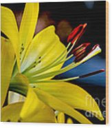 Yellow Lily Anthers Wood Print by Robert Bales