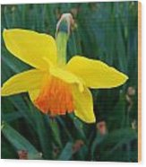 Yellow Lily Flower Wood Print