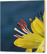 Yellow Lily Stamens Wood Print