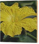 Yellow Luffa Blossom Wood Print