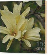 Yellow Magnolia Wood Print
