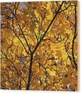Yellow Maple 3 Wood Print