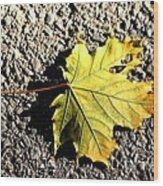 Yellow Maple Leaf On Asphalt Wood Print