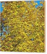 Yellow Maple Wood Print